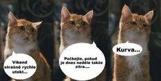 Funny Pins, Funny Memes, Jokes, Animals And Pets, Cute Animals, Haha, My Photos, Pets, Pretty Animals