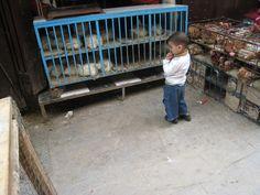 Boy looking at chickens - Fes Medina