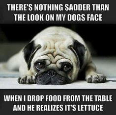 TOO funny! So true! #Pug