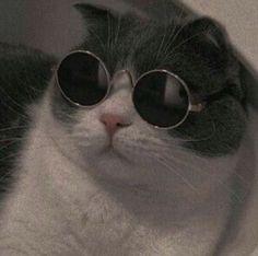cat aesthetic Cats World Cute Baby Cats, Cute Funny Animals, Cute Baby Animals, Kittens Cutest, Cats And Kittens, Funny Cats, Wallpaper Gatos, Cute Cat Wallpaper, Memes Chats