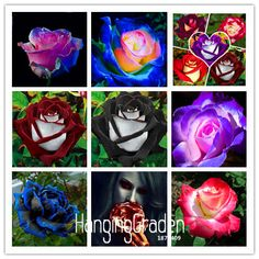 New Seeds 2017!White Heart Pink Side Rose Seeds 24 Colors Plants Potted Rose Rare Flower Seeds Balcony 50 PCS,#KJ1W18 #Affiliate
