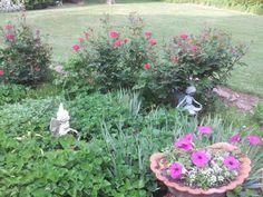 Fairies in my flowers