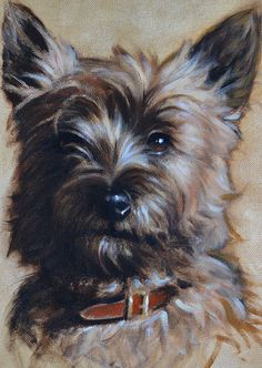 CAIRN TERRIER - Hazel Morgan DOG ARTIST