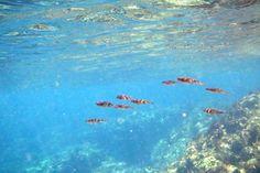 南伊豆にある「ヒリゾ浜」という場所が、まるでセブ島のように美しいと近年人気沸騰中。船でしか行くことができず、あたり一帯が国立公園でなにも開発されていないことからありのままの自然が残っており、その海の透明度は海底がくっきり透けて見えるほど!海の中には水族館のごとくたくさんの魚が泳いでおり、シュノーケリングにも最適。ハイシーズンは入場制限がかかるほど人気なヒリゾ浜をご紹介♪