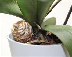Eine Stütze für kippelige Orchideen