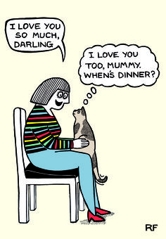 New chefandsue from waitrose weekend mag fame humour cards brilliantly observed cat behaviour by rupert fawcett for our new on the prowl greeting cards range m4hsunfo