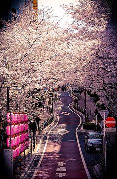 Sakura in Shibuya | Tokyo, Japan