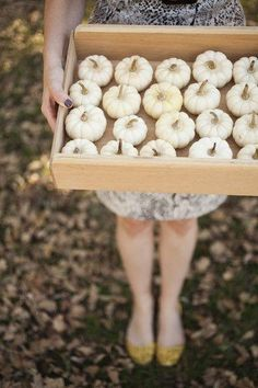 Tray of white pumpkins.