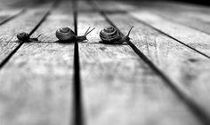 fotografie belle in bianco e nero | Animali in bianco e nero: le foto più belle del web | Tutto Gratis