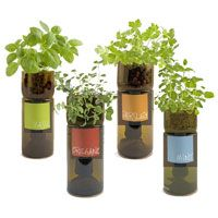 Wine bottle herbs...gotta try this since previous attempts at growing herb inside was a fail do to forgetting to water