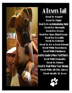 Boxers have a lover's soul and a warrior's heart. Best dogs ever. FREEE Ebook >> http://dogcareforyou.com/