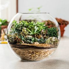Make your own terrarium. These are thirty five cute terrariums you can make and use as decor anywhere in your home. Terrariums, Terrarium Bowls, Succulent Bowls, Cactus Terrarium, Succulent Planter Diy, Succulent Gardening, Garden Terrarium, Diy Planters, Planting Succulents