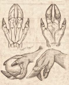 Lycanthrope Anatomy Top Image Row 2 Row 3 Row 4 Row Left, Right Row Left, Right Bottom Image Anatomy Drawing, Anatomy Art, Hand Anatomy, Anatomy Study, Anatomy Organs, Animal Anatomy, Creature Concept Art, Creature Design, Art Sketches