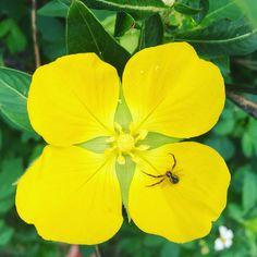 Flower & spider taken with iPhone