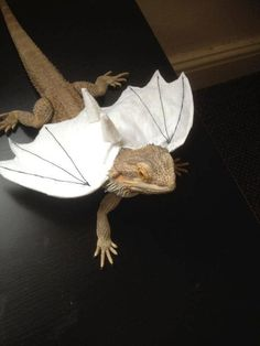 This makes me happy! Dragon wings Bearded dragon clothes by Monstertrims on Etsy, £5.99