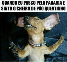 #petmeupet #cachorro #gatos #amoanimais #filhode4patas #maedepet