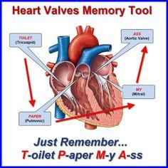 Heart Valves memory tool