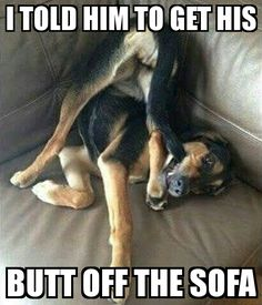 Funny Animal Memes Of The Day – 52 Pics - Lovely Animals World 32 Funny Animals Guaranteed to Make You Laugh This dog got tricked LOL 24 Funny Animal Pictures Of The Da. Funny Animal Jokes, Funny Dog Memes, Really Funny Memes, Cute Funny Animals, Funny Relatable Memes, Animal Memes, Cute Baby Animals, Funny Cute, Funny Dogs