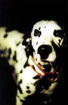 Lou Dog From Sublime. Pretty much the fourth member of the band. Never saw that dog on a leash once.