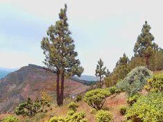 'Gran Canaria, Bergwald' von Dirk h. Wendt bei artflakes.com als Poster oder Kunstdruck $18.03