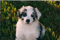 puppy Dash