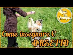 Addestramento/Educazione cani n°15 - Come insegnare al cane a passare SOTTO le gambe | Qua la Zampa - YouTube