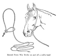 A complete site about horses, their behavior, riding and training horses with understanding and knowledge and tips on good horsemanship Horse Bridle, Horse Halters, Horse Gear, Breyer Horses, Horse Riding Tips, Horse Tips, Horse Facts, Horse Accessories, Hobby Horse