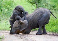 Mamma elefante con il piccolo