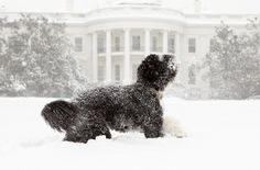 Bo Obama plays during a blizzard: