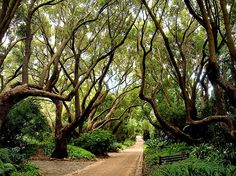 Camphoran shade at Kirstenbosch, South Africa Great Places, Places To See, Beautiful Places, South African Holidays, Cape Town Holidays, South Afrika, Holiday Destinations, Landscape Photos, Nature Photos