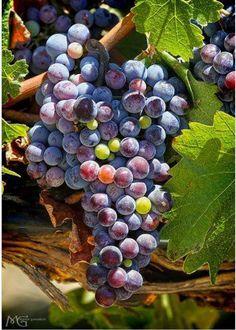 Unas hermosas uvas para pintar