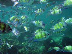 Snorkeling off Koh Phi Phi, Thailand