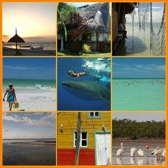 Isla Holbox au Mexique, #villagetranquille #plagesexotiques #oiseaux #poissonscolaussaux #hotelsprixraisonnables #beaucoupnatural #ecotourisme aldeamaya@hotmail.com