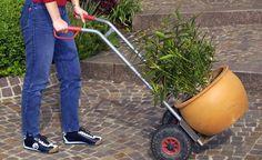 Oleander erfolgreich überwintern -  Wie die meisten Kübelpflanzen aus dem Mittelmeerraum verträgt auch der Oleander leichten Frost. So bringen Sie die Kübelpflanze durch den Winter.