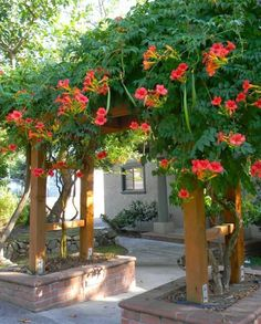 [I like the style of the lower pergola, and also the way it's set into brick planter beds.] If you're looking for something to cover an arbor, pergola or fence in your garden must check out these flowering vines!