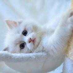 """queenbee1924: """"sweet kitty """""""
