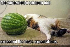 this cat is pushing a watermelon meme - Google Search