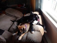 Flint Update: They and Bella are loving each other just like family. Flint is a great dog. We love him! Thank you for letting us adopt Flint!!