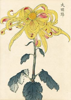 Keika Hasegawa Chrysanthemum Wood Block Prints 1st Edition 1893 $115