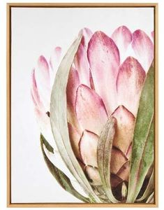 Laurèl Kate & All Things Decor 28 Slyvie Pink Protea Flower Framed Canvas By Amy Peterson Natural - Kate and Canvas Frame, Canvas Wall Art, Green Canvas Art, Flowers Background, Protea Flower, Rosa Pink, Flower Artists, Colorful Wall Art, Flower Aesthetic
