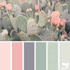 Color Pastel color palette from cacti.Pastel color palette from cacti. wandfarbe pastell Cacti Color Pastel color palette from cacti. Pastel Colour Palette, Colour Pallette, Pastel Colors, Color Combos, Color Schemes Colour Palettes, Spring Color Palette, Rose Gold Color Palette, Nursery Color Schemes, Light Colors