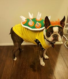 Super Mario Brothers Bowser dog Halloween costume