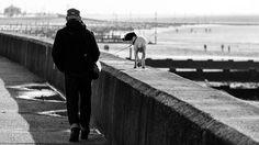 Senioren met een hond blijken gezonder