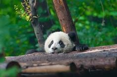 41 Best Planet Earth Wildlifes Images Adorable Animals Cut