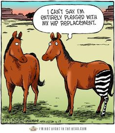 horse caricatures | Funny Horse Comic - Hip Replacement - Funny Facebook Post | Funny Post ...