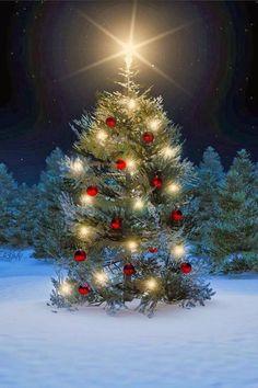 2013 beautiful Christmas tree via Debbie Campbell Christmas Scenes, Noel Christmas, Outdoor Christmas, Country Christmas, Christmas Pictures, Winter Christmas, Christmas Lights, Vintage Christmas, Christmas Decorations