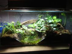 Fire Belly Toad Tank Setup | New big build would love some input from others!! - Reptile Forums