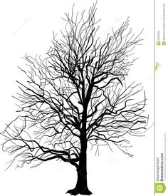 bare-tree-silhouette-isolated-white-illustration-background-33122033.jpg (1115×1300)