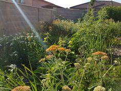 Výsadba prírode-blízkeho charakteru. I tá má svoje osobitné čaro. Plants, Plant, Planets