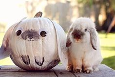 Halloween rabbit… CHECK OUT … Francines Fun Fund to learn about marketing.
